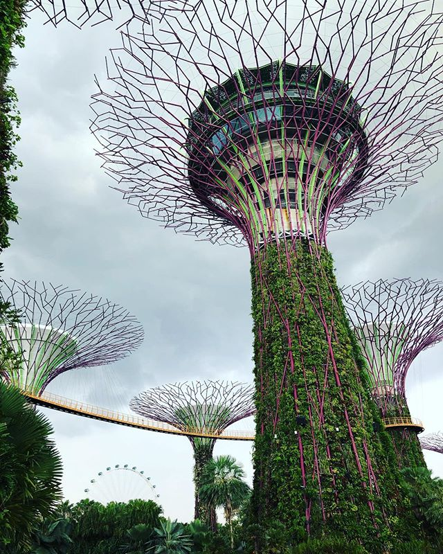 Gardens by the Bay in Singapore was so amazing! I heard of this place a few years ago, but never imagined I would get to see it!