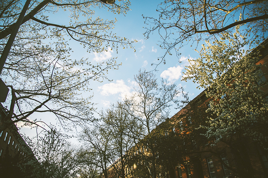 spring-in-brooklyn-050313.jpg