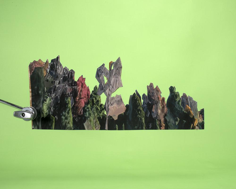 """Trees #1, 2019. 40 x 50"""" Pigment Print."""