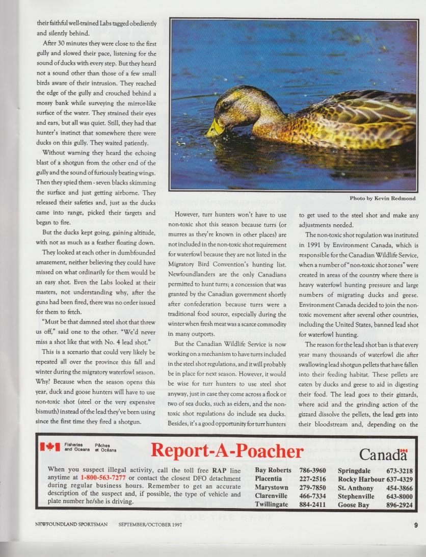 1997 NS p8  v7 n5_Page_2.jpg