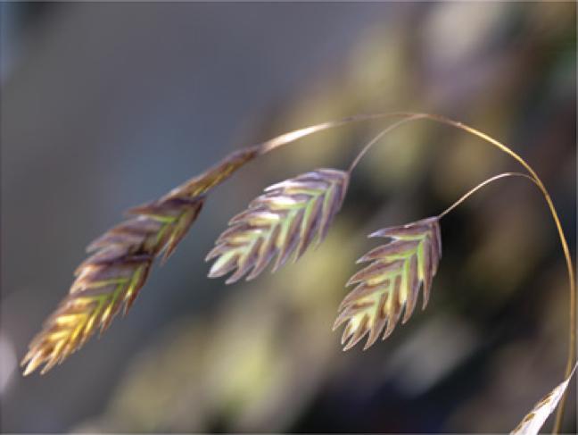 River Grasses 3