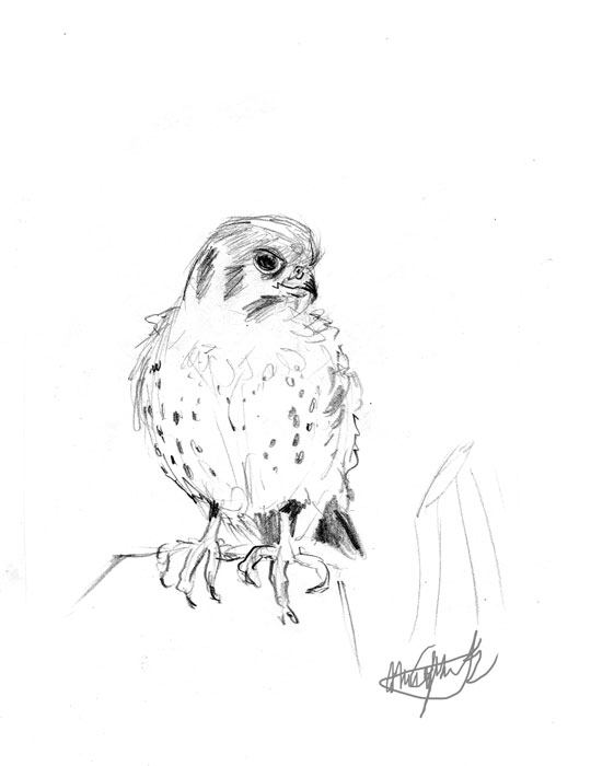 Canales-M_sketches-5_bird_web.jpg