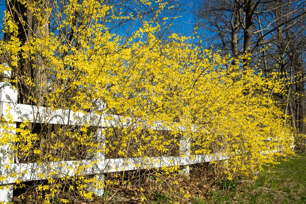Softened fence