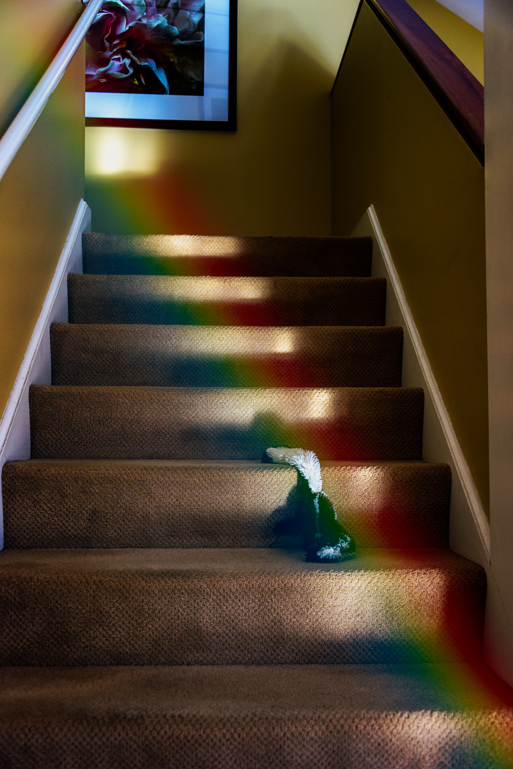 Week Two, Light Rays...Rainbow Stairs (ella)