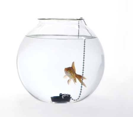 fishbowl-dont-piss-me-off