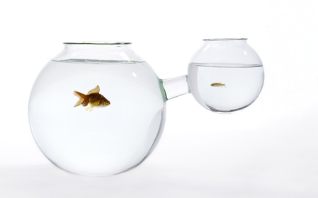 fishbowl-xs-or-xl