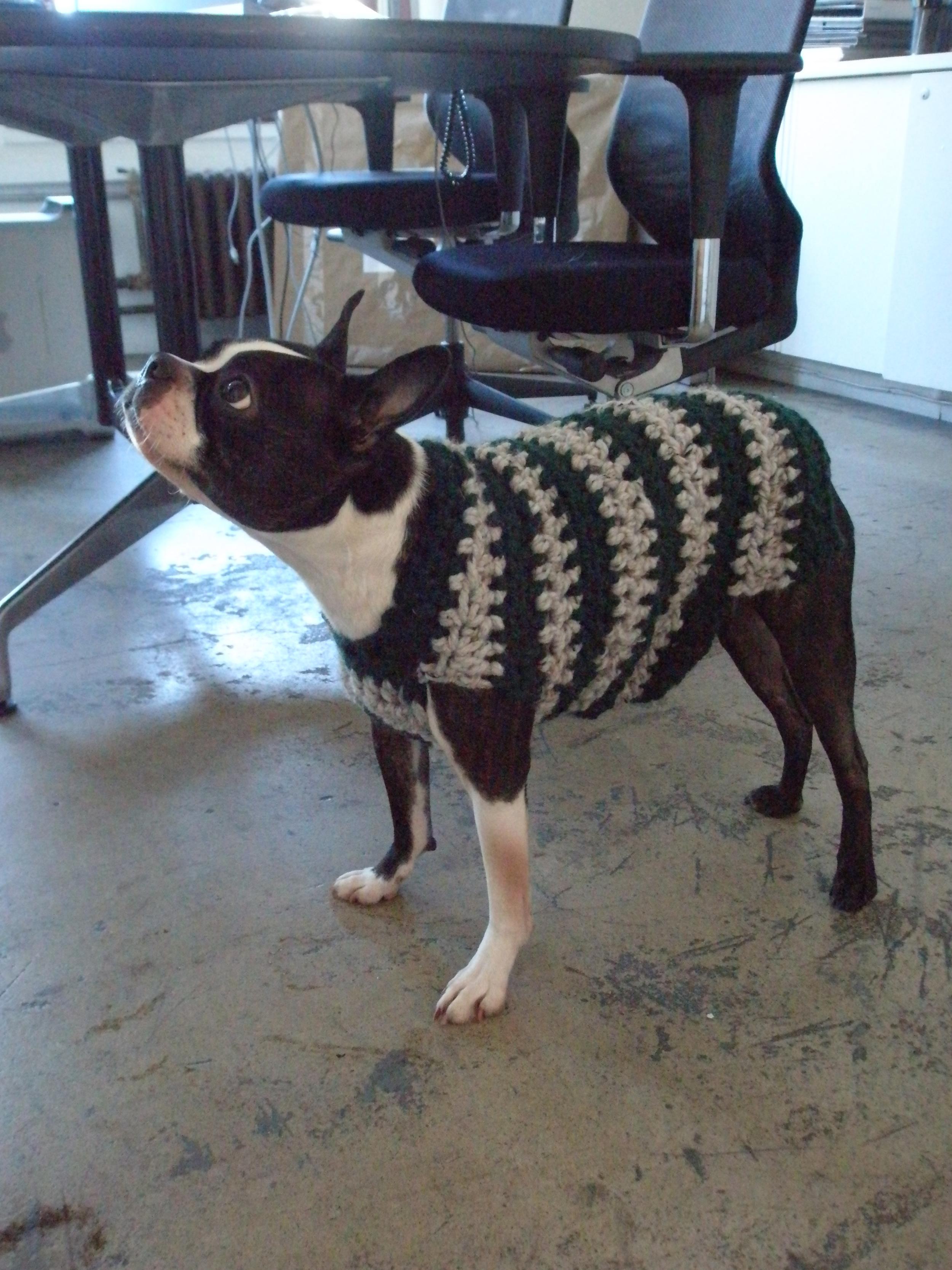 mini project: roger [dog] sweater — nummynims