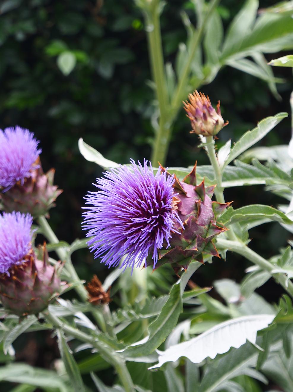 Purple Flower_02.jpg