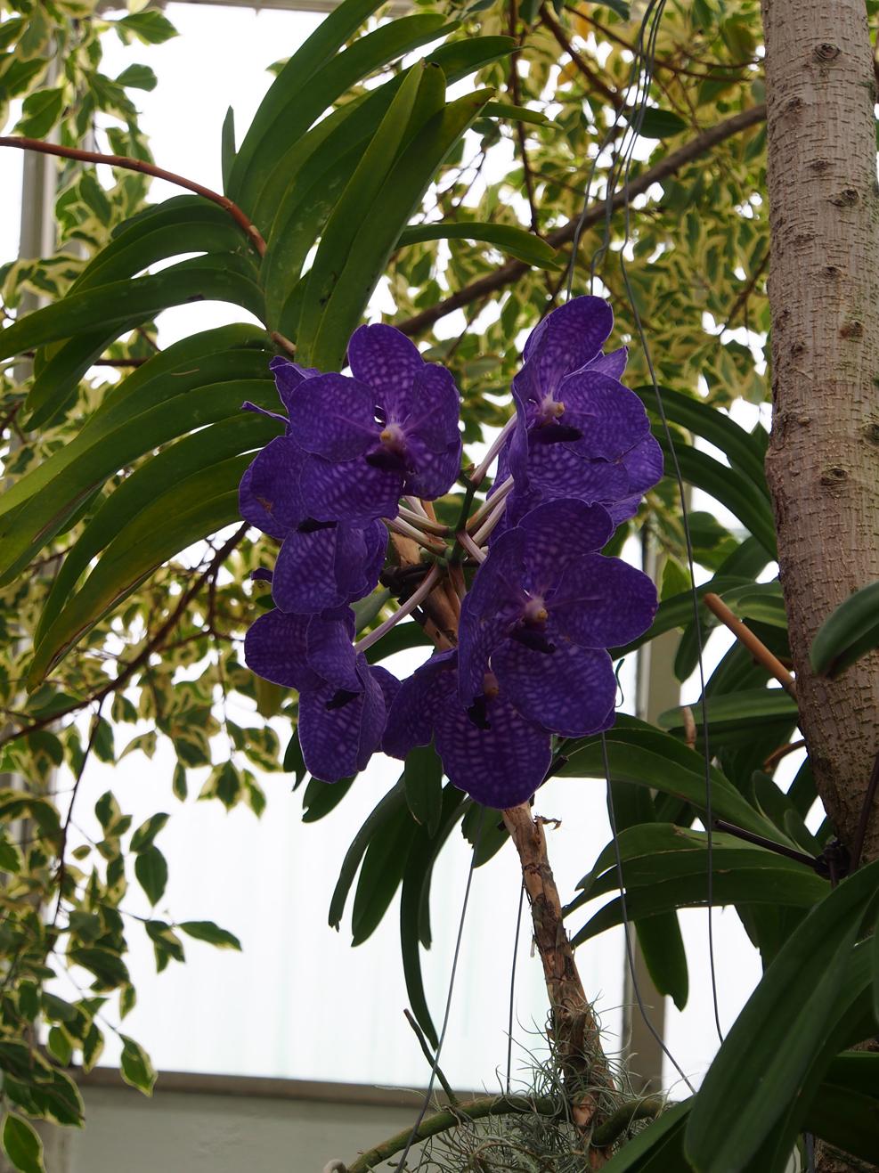 Purple Flower_03.jpg