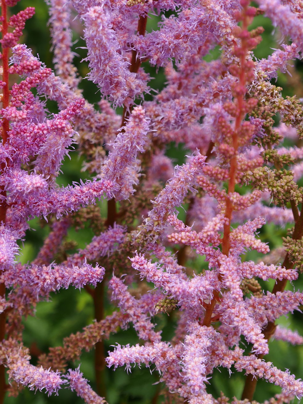 Purple Flower_05.jpg