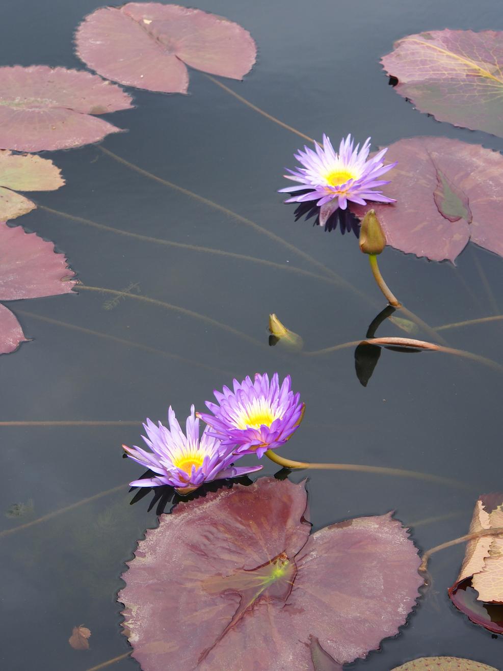 Purple Flower_06.jpg
