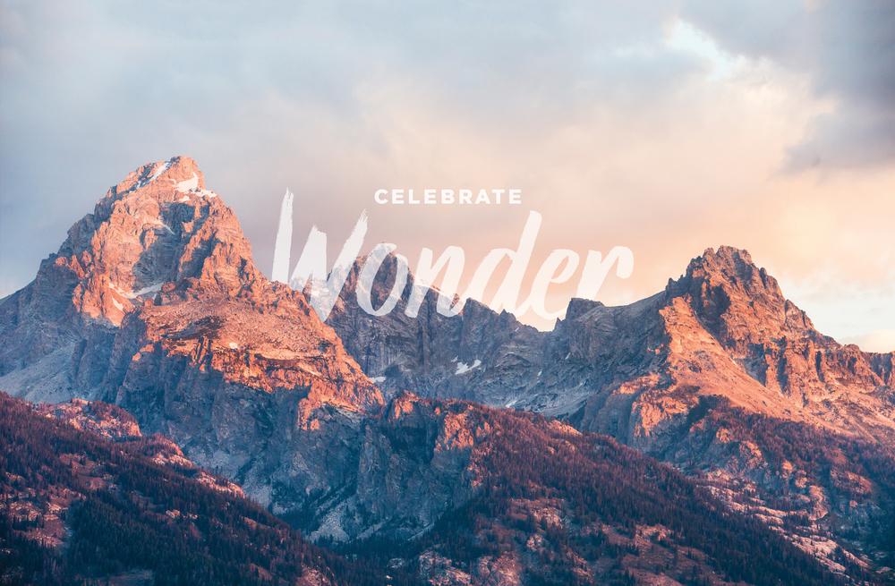 Carando_Wonder