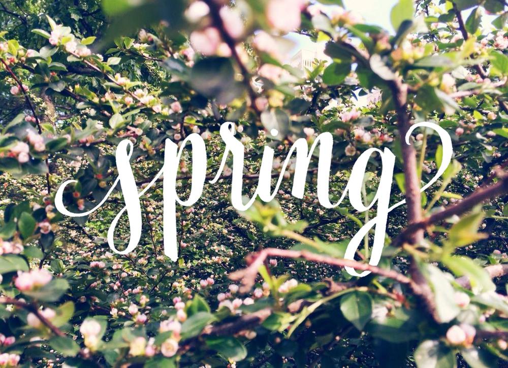 spring_carando