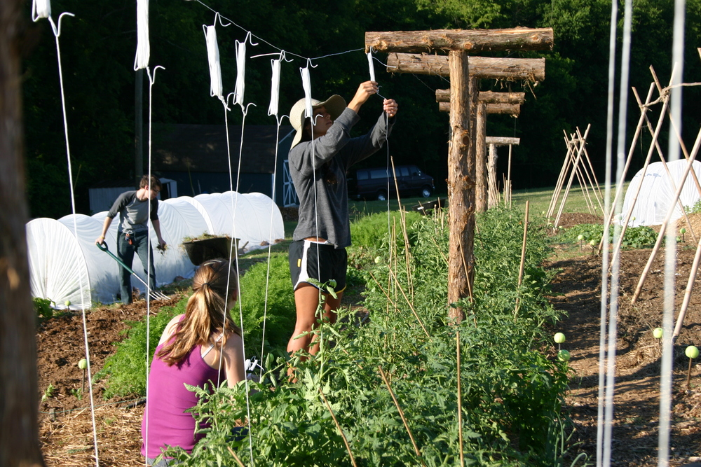 At the time when this article was written, ecological responsibility was weighing on our hearts, but we did not yet even possess a piece of land to begin cultivating. Just two years later, we moved onto a 7-acre plot in the Hopewell neighborhood. Through the hard and faithful work of Seth Davis, Hopewell Gardens was created. Now, students at the Institute along with volunteers and employees have the opportunity to work together to cultivate fresh produce from the ground. We are so grateful for this plot of land where we can train and experiment gardening techniques that we want to teach others in the third world.