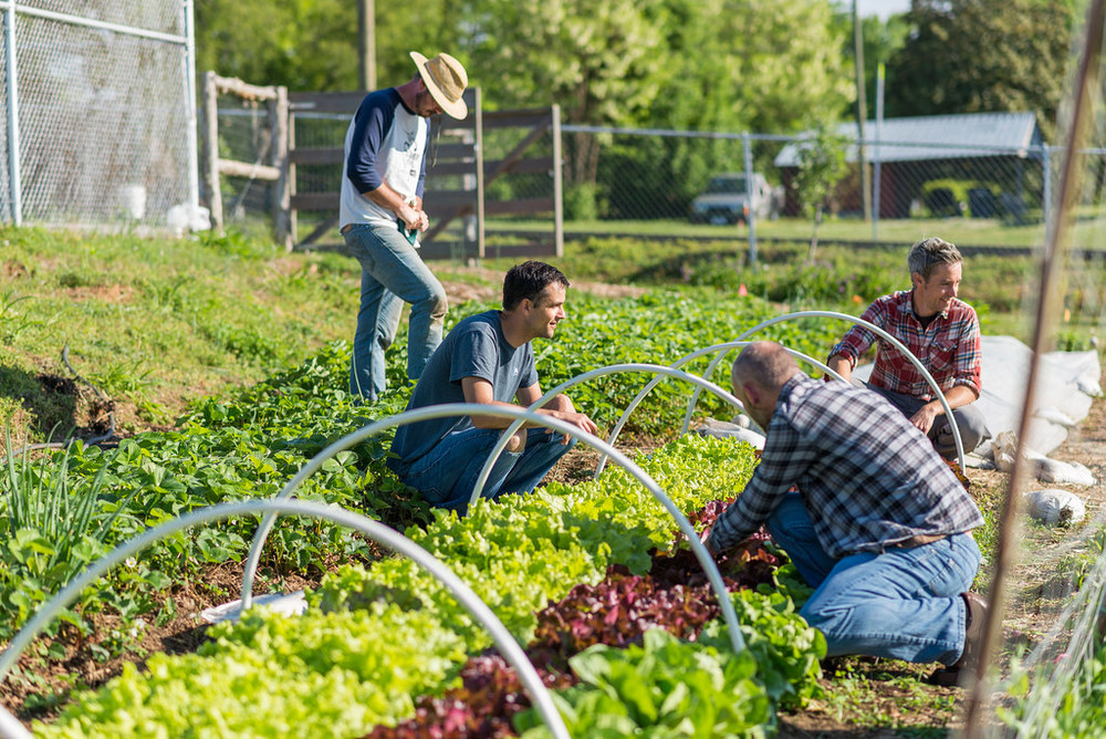 Jeff Sherrod, Seth Davis, Keith Turner and guest Bryan McElreath have a good conversation while weeding strawberry and lettuce garden beds. Meaningful conversation among friends is a highlight of time in the garden.