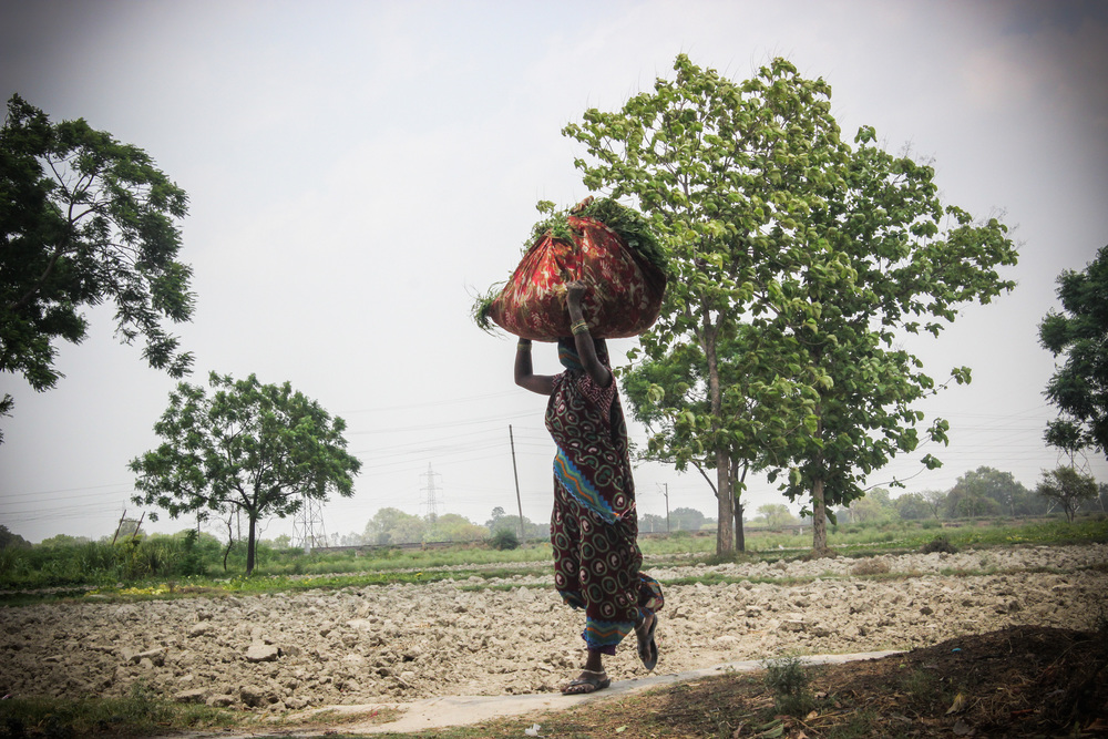 A dramatic depiction of the reality of rural Indian women: this woman is responsible for carrying her harvest home, walking past the meeting as she carries a heavy load home.