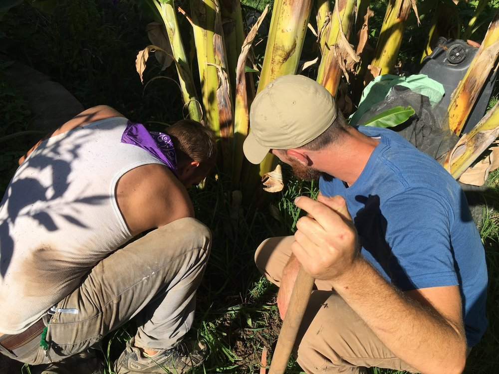 Jeremiah Watson and Michael Watkins investigate the roots of the plants to better understand the source of the issue.