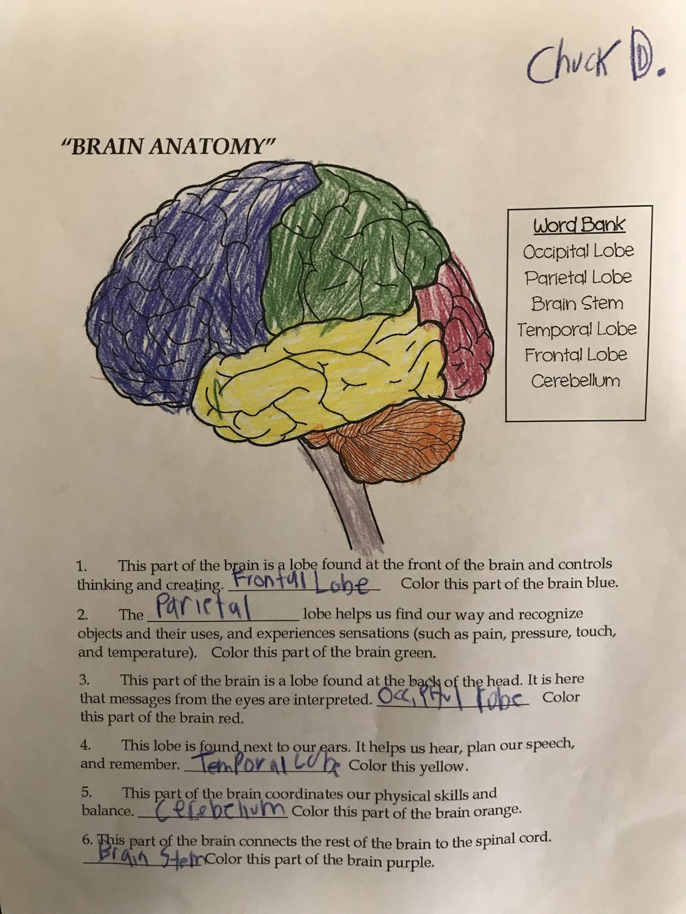 Charlie Meadows learns the parts of the brain and what their function is. Ancient Egyptians used to pull out the brains thinking it was useless tissue and toss throw it away! wowza!