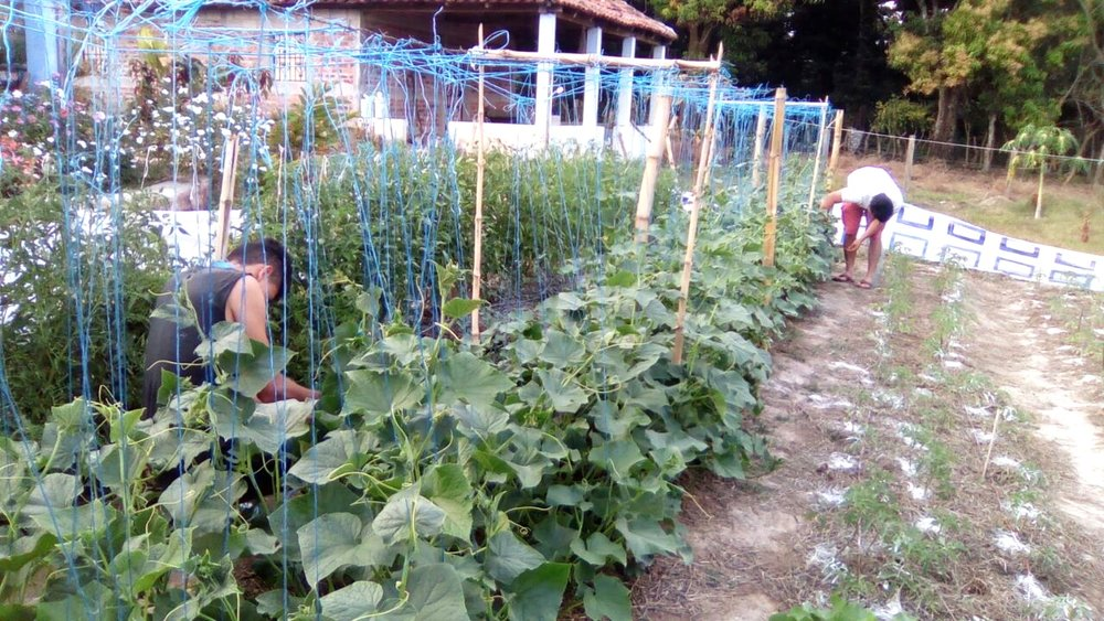The campus garden. Our team works hard to grow nutritionally dense vegetables, without chemicals, to feed our cooperatives and interns, but also to demonstrate the possibility to neighbors.