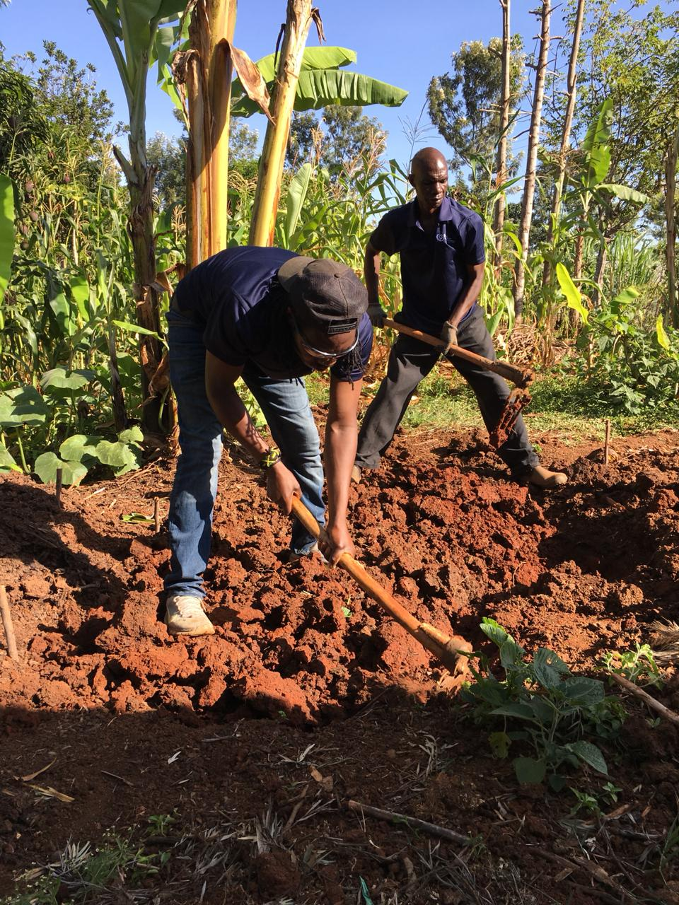 Reuben (front) and his brother Simon (rear) prepare the soil for a banana circle.