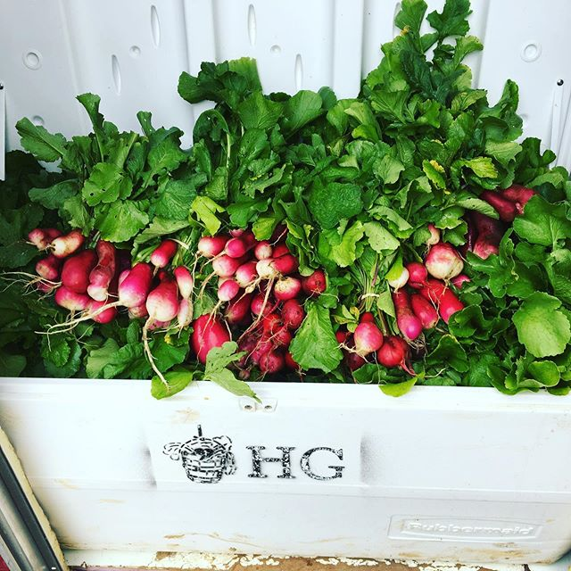 Radishes for days. Come see us tomorrow @hipdfarmersmarket from 4-7pm or at @nyumbaristaohv on Saturday from 11:30am-1pm.