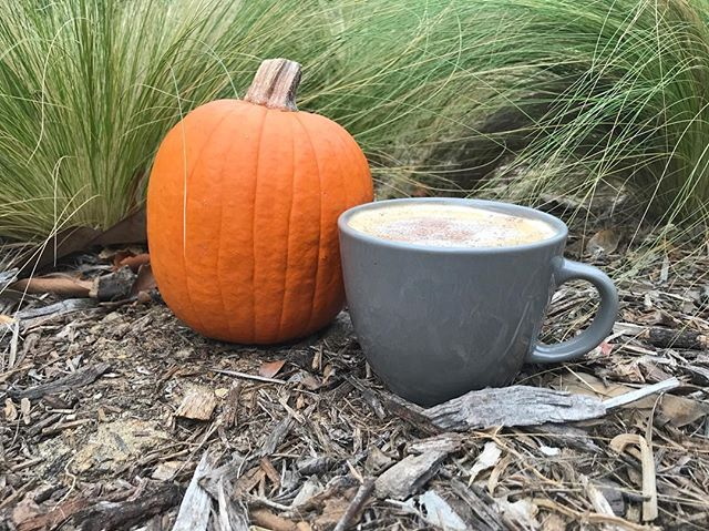 Leaves change, air chills, but most importantly, Pumpkin Pie Latte returns...Hello Autumn!