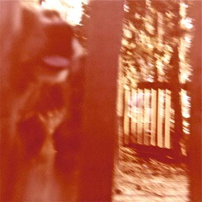 Backyard+Scottie+or+Scarlet.jpg