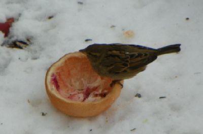 Bird_03