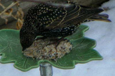 Bird_07