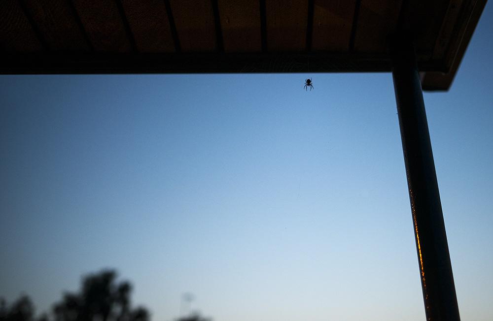 Nu har dessa små varelser börja dyka upp på nätterna... Gillar verkligen inte dom, dom sitter där o bara väntar på byten ska komma till dom... kan berätta att i Mexico hade vi nog hans storebror hängande på våran balkong den var kanske 10 gånger större...