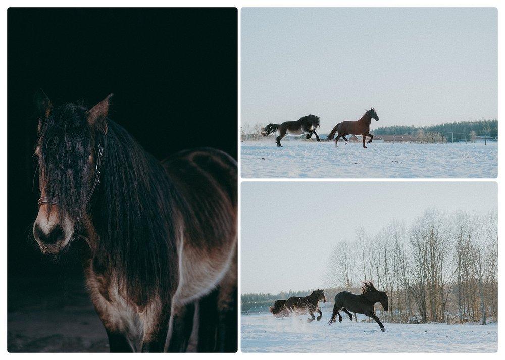 Hästfotografering Linköping