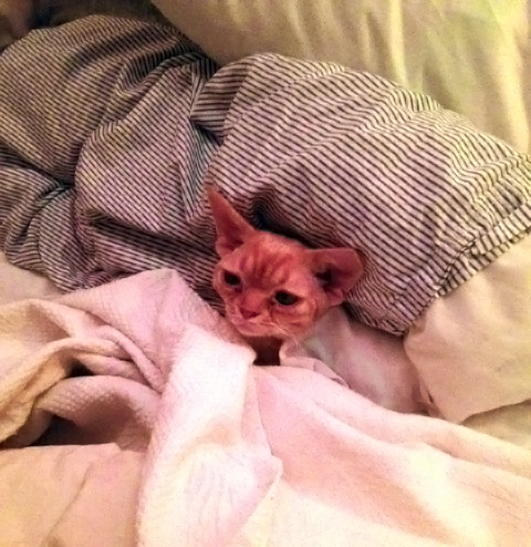 Aubrey in bed.JPG