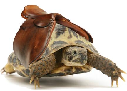 tortoise-saddle.png