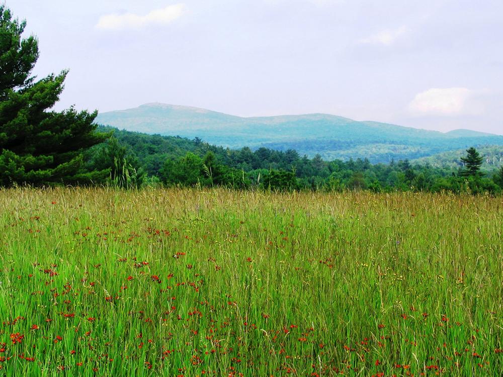 Meadow&mt.big.jpg