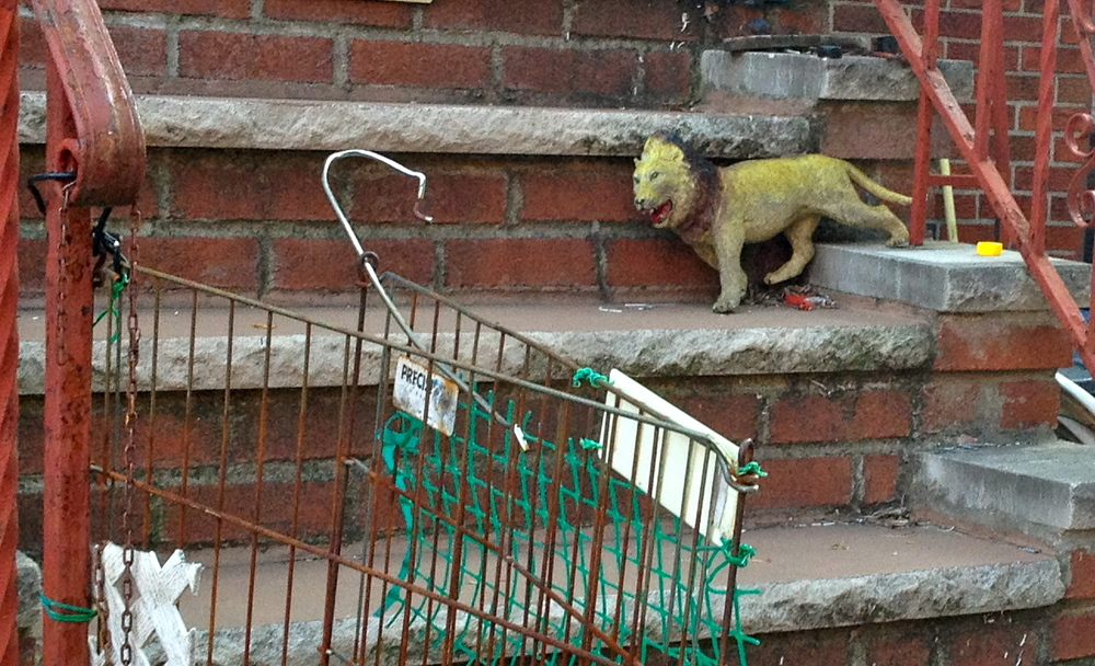 lions tigers k murphy.JPG