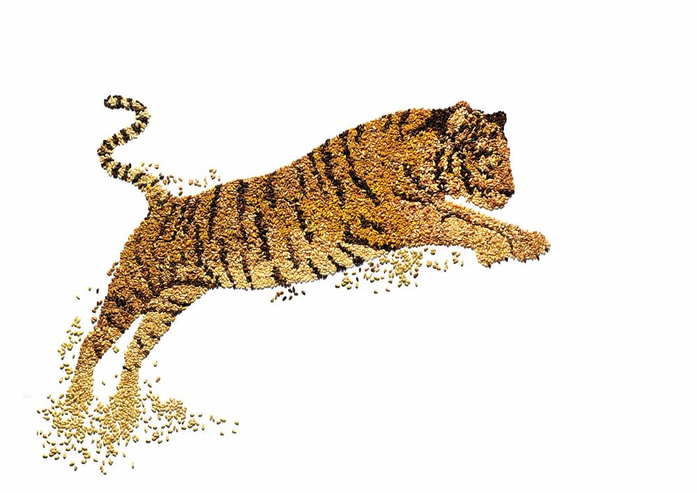 Pine Nut Tiger.  Commissioned by World Wildlife Fund. Collaboration with photographer, David Arky.