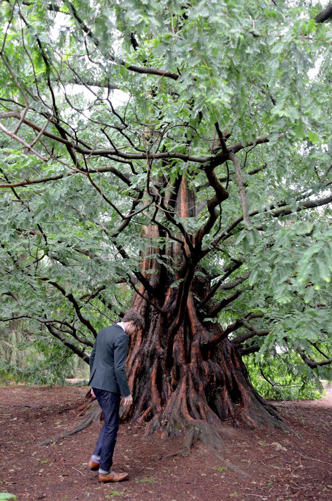 Weekend Casual Sunflowerman Longwood tree
