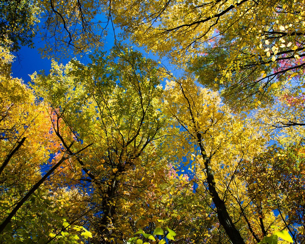 boltontrees.jpg