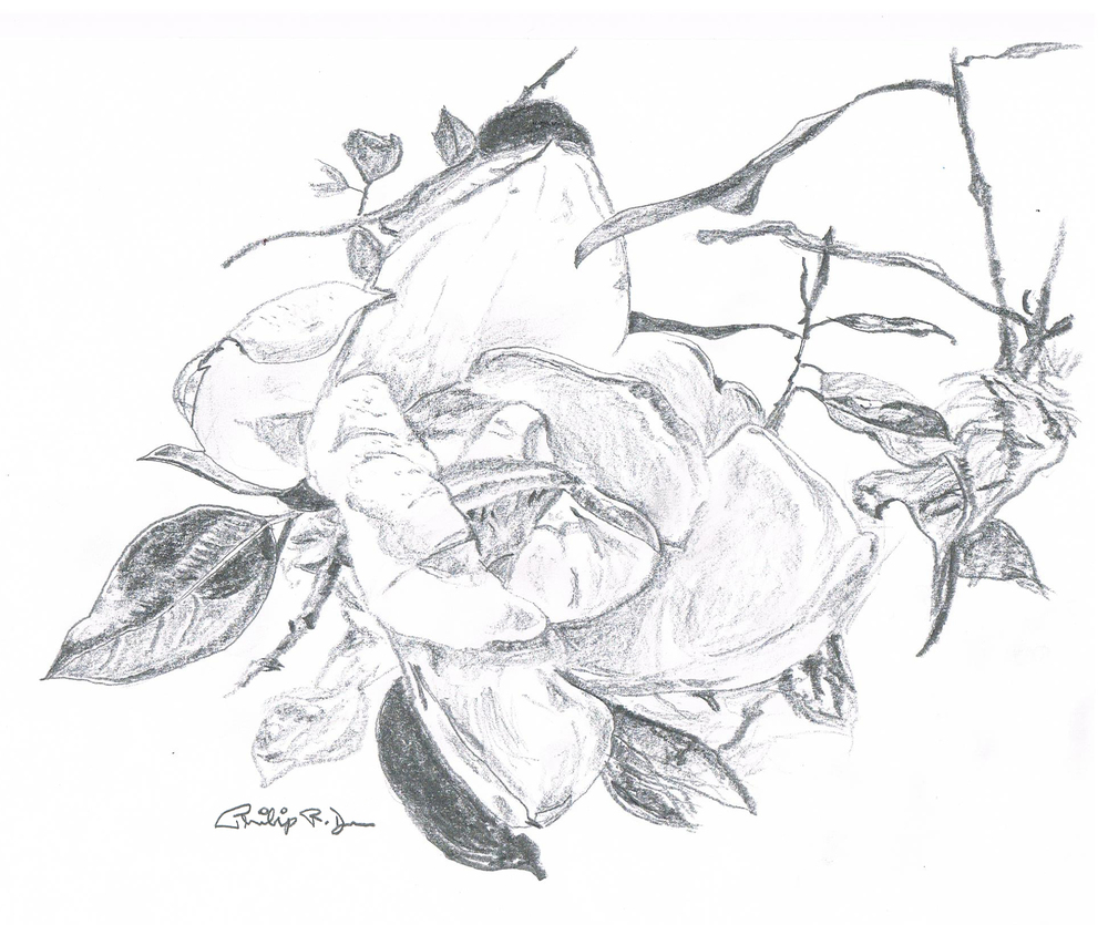 magnolia signed.jpg