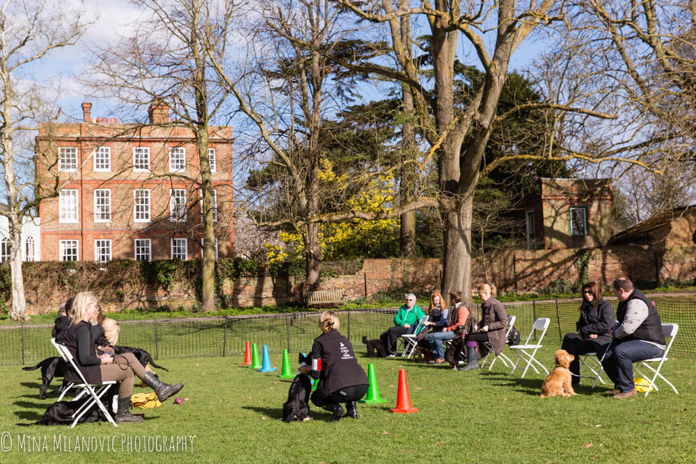 Reality Dog Training Marble Hill Park