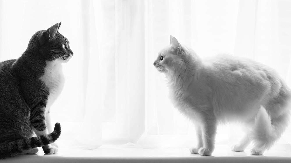 Richmond Pet Photographer
