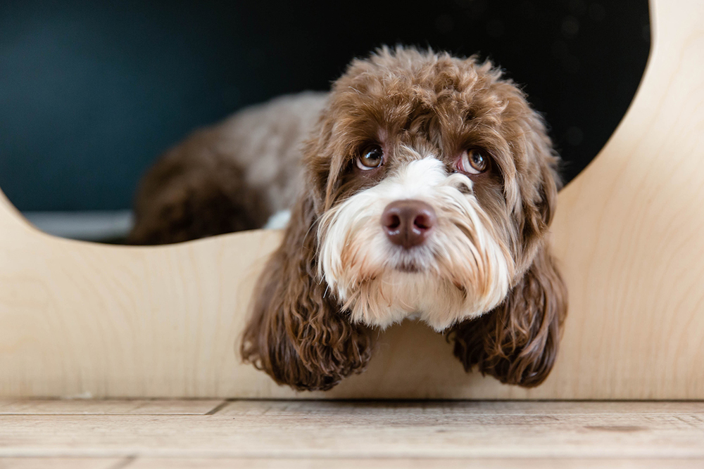 Richmond Dog Photographer | Sniffles Dog Grooming Spa