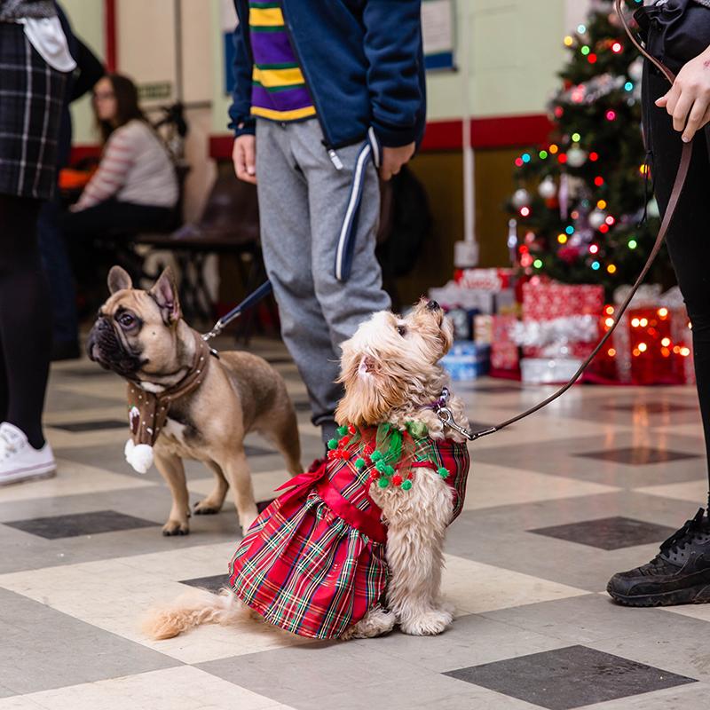 Reality Dog Training Christmas Class