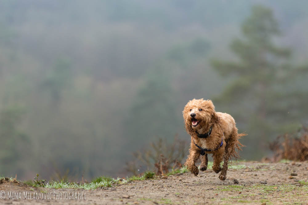 Mina Milanovic Dog Photography / Dog Photographer London Dorking Surrey