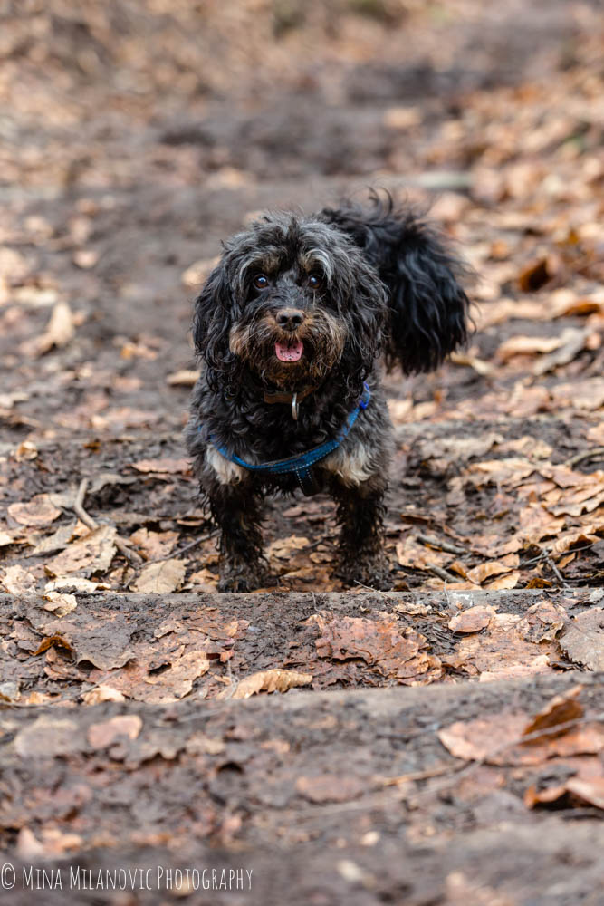 Mina Milanovic Dog Photography / Dog Photographer London Dorking Surrey