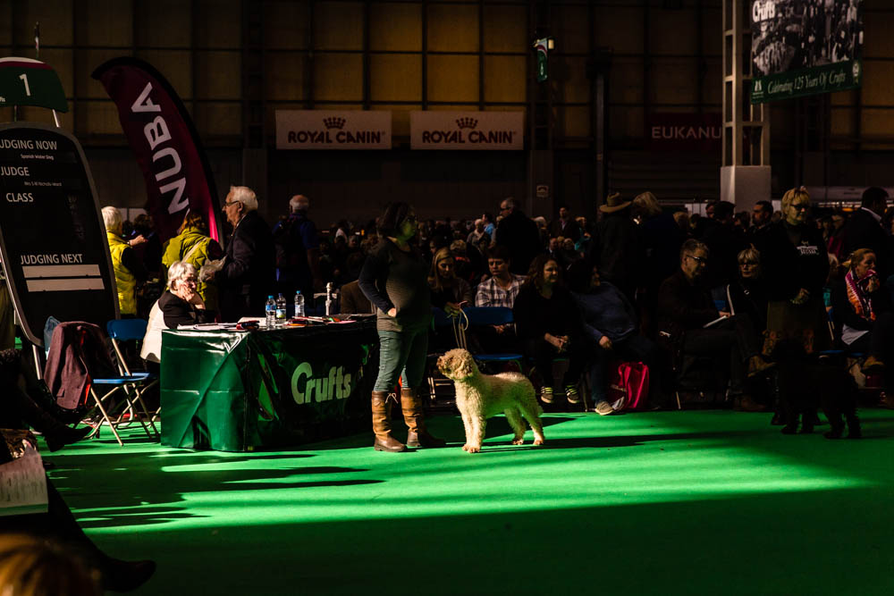 Crufts 2016, NEC, Birmingham_Mina Milanovic Photography