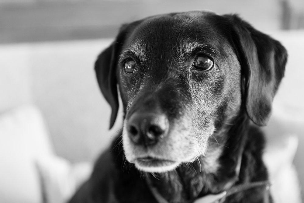 Richmond dog photographer_Richmond upon Thames dog photography