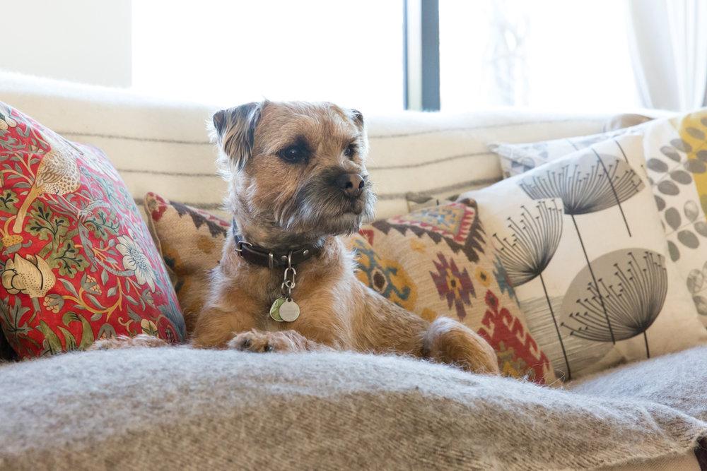 London dog photographer_Richmond upon Thames dog photographer