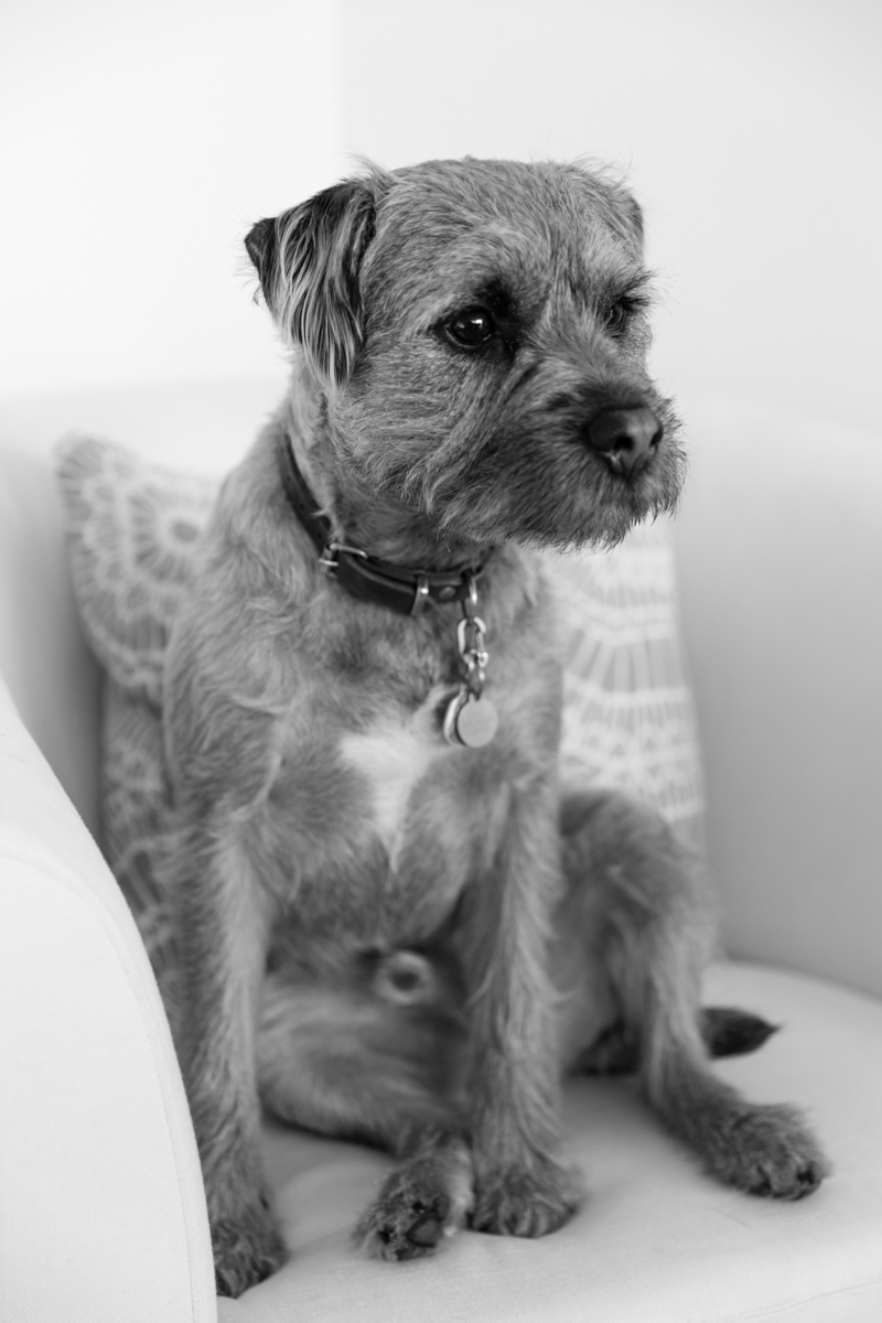 Richmond dog photography_London and Surrey dog photographer