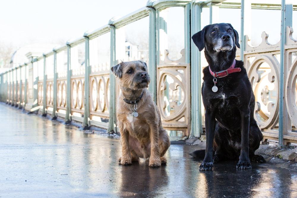 Richmond dog photographer_London and Surrey dog photographer